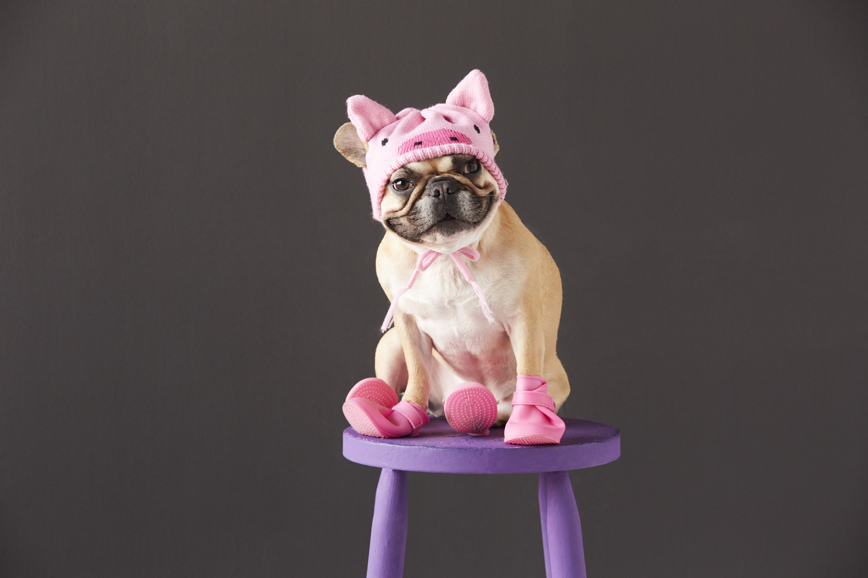 french-bulldog-wearing-pig-costume